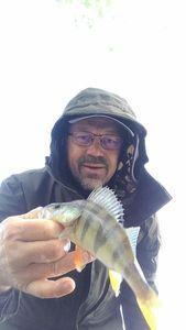 European Perch — Philippe Baran Philfish