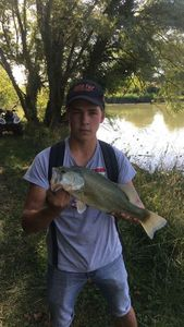 Largemouth Bass — Nathan Journoux