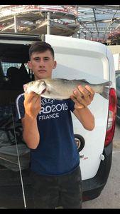 European Bass — Arnaud Malizia