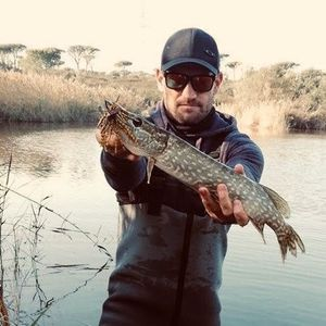 Northern Pike — Morgan Jarno