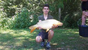 Common Carp — Lucas Talieu
