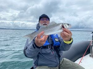 European Bass — PatDom HANAT