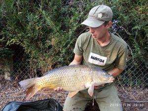 Common Carp — Damien Guarrera