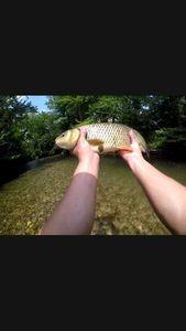 Chub — Fishing Vortex