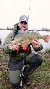 European Perch — Adamas Fishing
