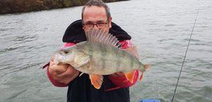 European Perch — Didier Cap
