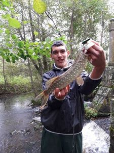 Northern Pike — Dylan Dylan