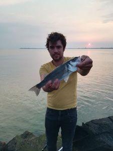 European Bass (Seabass) — Julien Rouge