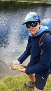 Brown Trout — Pierre Ingles