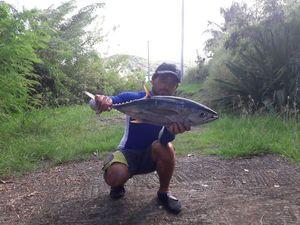 Yellowfin Tuna — Romain Marthien