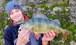 European Perch — Florian Cretin
