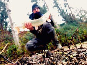 Northern Pike — Nicoco Tortul