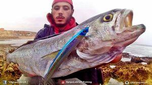 Tassergal — Yassine SeaBass Fisherman