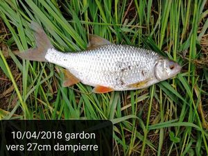 Gardon — Jean Luc Dhote
