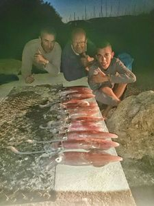 European Squid — Jérôme  Lomonaco