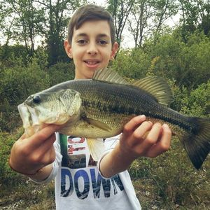 Largemouth Bass — Tom Saget