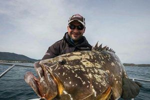 Brown Grouper (Dusky)
