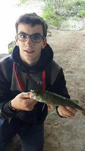 European Perch — Tanguy Rapicault
