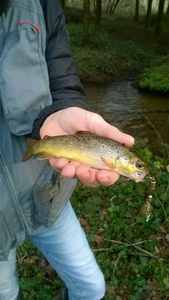 Brown Trout — G G