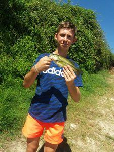 Largemouth Bass — Billy Batteux
