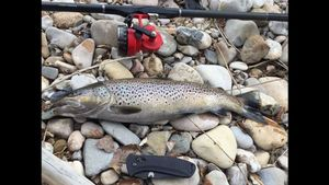 Brown Trout — Jean Marie Lacombe