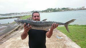 Narrowbarred Mackerel — Franck Sossy Gurrieri Pba