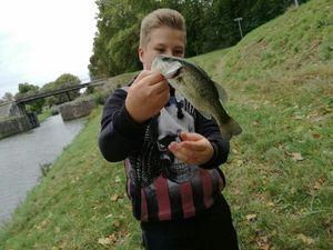 Largemouth Bass — Maxence Goichot