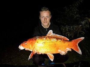 Koï Fish — Warga Cgaet