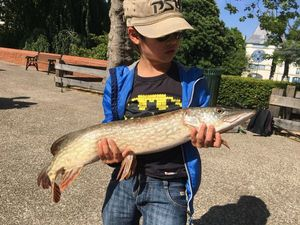 Northern Pike — Nate McAngle