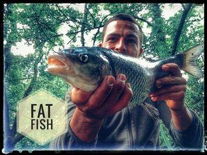 Chub — Douving Fishing