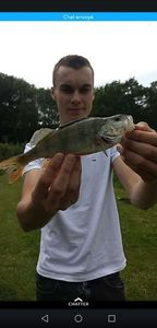 European Perch — Trystan Lenik
