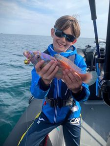 Cuckoo Wrasse — Aventure Pêche Bretagne APB