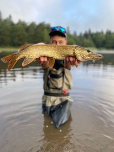 Northern Pike — Pescaïre 31
