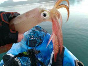 European Squid — Christophe Curie