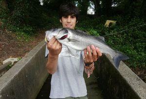 European Bass (Seabass) — Corto Oliva