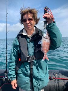 Red Porgy — Aventure Pêche Bretagne APB
