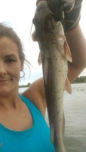 Channel Catfish — Dana Snyder