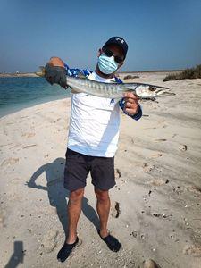 Great Barracuda — Arnaud Ripard