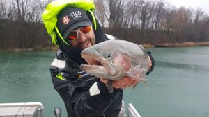 Rainbow Trout — jimmy Maistrello
