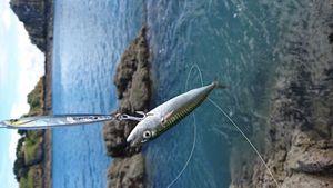 Mackerel — Benoit Genu