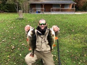 European Perch — Ptit-kal team no-killeurre carna