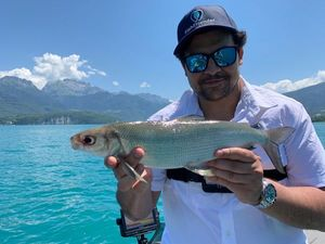 European Whitefish — Greg FishFriender