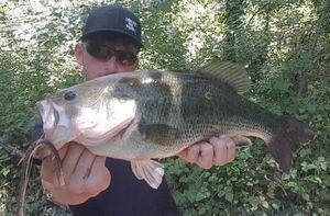Largemouth Bass — Nicolas Court