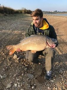 Common Carp — Rémi Guillet