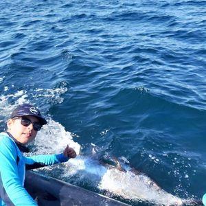Bluefin Tuna — Dubreau Enzo