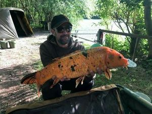 Koï Fish — Jonathan Moncany