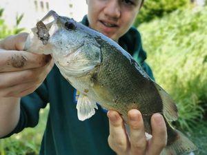 Smallmouth Bass — Leo MOUNEYRES