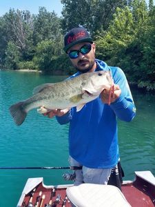 Largemouth Bass — Andrea Fusignani