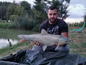 Grass Carp — Guillaume Did