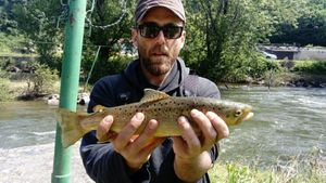 Brown Trout — Julien Nours
